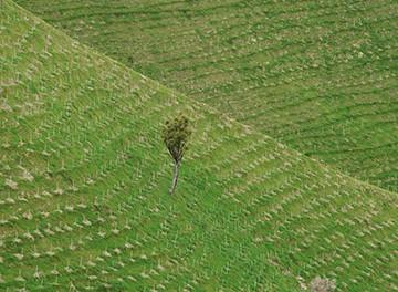 Mallazo-reforestacion-1